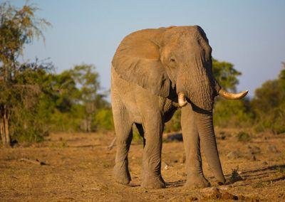 Signature-Routes-elephant
