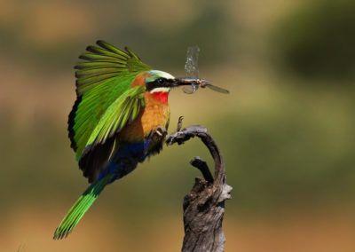 Signature-Tours-Header-Image-hummingbird